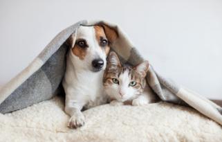 gatto-cane